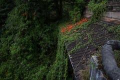 Övergett och mystiskt hotell Bedugul Taman i dimman Indonesien Fotografering för Bildbyråer