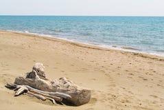 Övergett trä på stranden Royaltyfri Bild