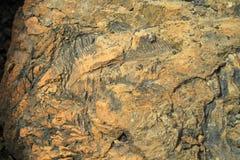 Övergett villebråd för coalmining i den Kemerovo regionen Royaltyfri Fotografi