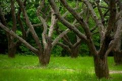 övergiven äpplefruktträdgård Arkivbild