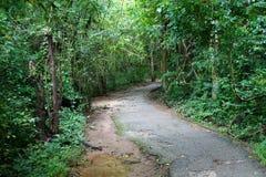 Övergiven bana till djungeln Royaltyfria Foton
