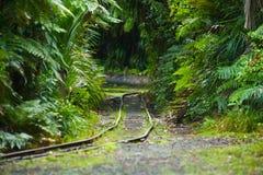 Övergiven djungeljärnväg Arkivfoto
