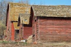 Övergiven gammal ladugård i vinter Royaltyfri Fotografi