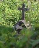 Övergiven gravvalv bland vegetationen royaltyfri bild