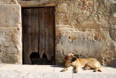 övergiven hund Royaltyfri Bild