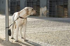 övergiven hund Royaltyfria Bilder