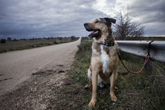 övergiven hund Arkivbilder