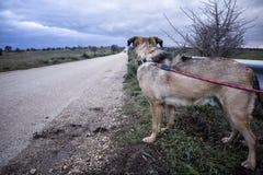 övergiven hund Arkivfoto