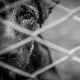 övergiven hund arkivbild