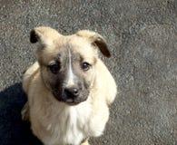 övergiven hund little Royaltyfri Bild