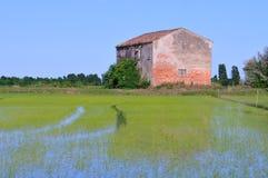 övergiven jordbruks- byggnadsfältrice Arkivfoton