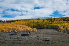 Övergiven kabin nära Aspen Trees i Colorado Fotografering för Bildbyråer