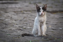 övergiven katt royaltyfri fotografi