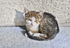 övergiven kattunge Royaltyfri Fotografi