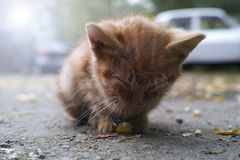 övergiven kattunge Arkivbild