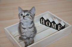 Övergiven kattunge som söker efter hennes nya hem Royaltyfri Bild