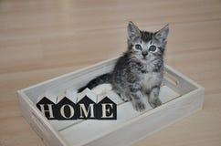 Övergiven kattunge som söker efter hennes nya hem royaltyfria foton