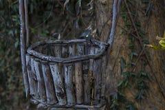 Övergiven korg som hänger från träd royaltyfri foto