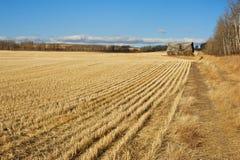 Övergiven ladugård i harvestedwheatfält Arkivfoton