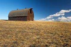 Övergiven ladugård i skördat vetefält Arkivbild