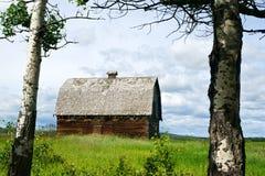 Övergiven ladugård med asp- träd i sommar Arkivbild