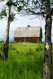 Övergiven ladugård med asp- träd och det gräs- fältet Arkivbild