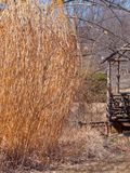 Övergiven och riden ut trästruktur in över vegeterat fält royaltyfri bild