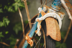 Övergiven rostig cykel för gammal tappning med murgrönan på bakgrunden Royaltyfri Fotografi