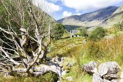 Övergiven stuga bak träd i lantliga Irland Arkivfoton
