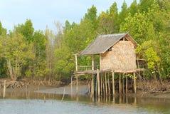 Övergivet hus i mangroveskogen. Fotografering för Bildbyråer
