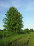 övergivet järnväg spår Royaltyfria Foton