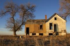 övergivna gammala trees för husbild Arkivfoto