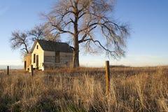 övergivna gammala trees för husbild Arkivfoton