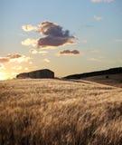 övergivna lantbrukarhemfältsuns Arkivbild