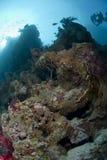 Övergivna revar på en tropisk korallrev Arkivfoton
