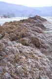 överhopar täckt med rimfrost gödsel Arkivbilder
