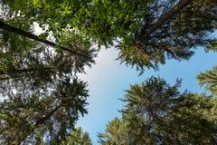 Överkant av den gröna skogen Arkivbild