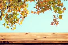Överkant av den wood tabellen med det härliga höstlönnträdet på himmelbakgrund Arkivfoton