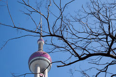 Överkant av det pärlemorfärg tornet bak avlövat träd Arkivfoto