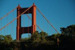 Överkant av Golden gate bridge och träden Arkivfoto