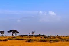 Överkant av kilimanjaroberg i soluppgången Royaltyfri Bild