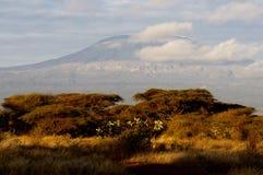 Överkant av kilimanjaroberg i soluppgången Arkivfoto