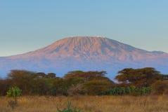 Överkant av kilimanjaroberg i soluppgången Arkivfoton