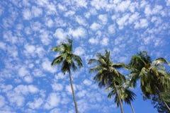 Överkant av kokosnötpalmträd Fotografering för Bildbyråer