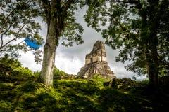 Överkant av mayan tempel I Gran Jaguar på den Tikal nationalparken - Guatemala Arkivfoton