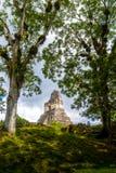 Överkant av mayan tempel I Gran Jaguar på den Tikal nationalparken - Guatemala Royaltyfri Fotografi