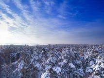 Överkant av träd i snö efter tungt snöfall ovanför skogliggande skjuten snowtreesvinter blå molnig sky royaltyfri fotografi