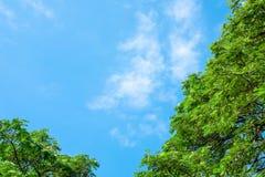 Överkant av trädet med bakgrund för blå himmel Arkivbild