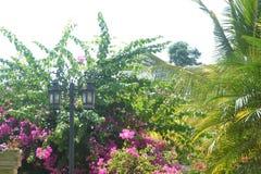 Överkant för bakgrunder 015-A av träddelen med rosa blommor Fotografering för Bildbyråer