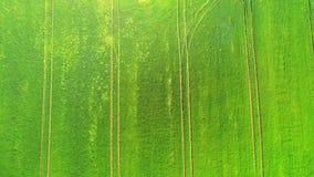 Överkant för flyg- sikt Flyga över ett fält av grönt vete på en ljus solig dag I mitt av de stora träden för fält två arkivfilmer